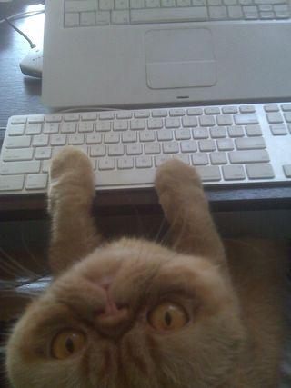 MeowBlog